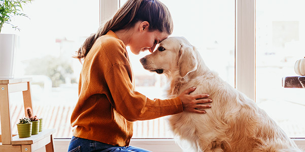 beautiful woman hugging her adorable golden retriever dog at home. love for animals concept. lifestyle indoors
