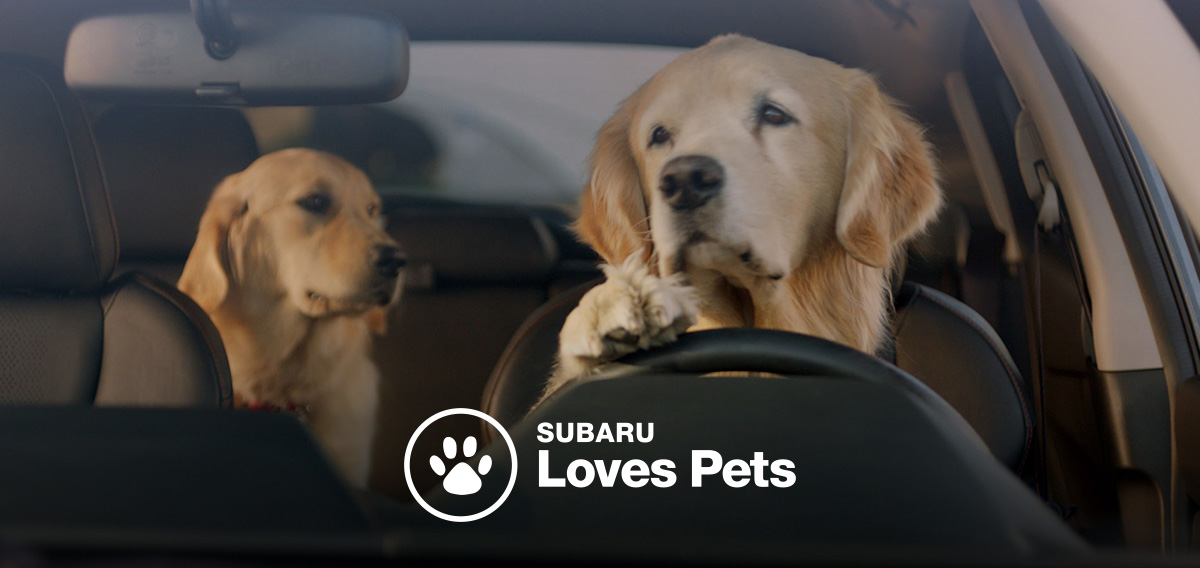 two golden retrievers driving a car - subaru loves pets logo displayed